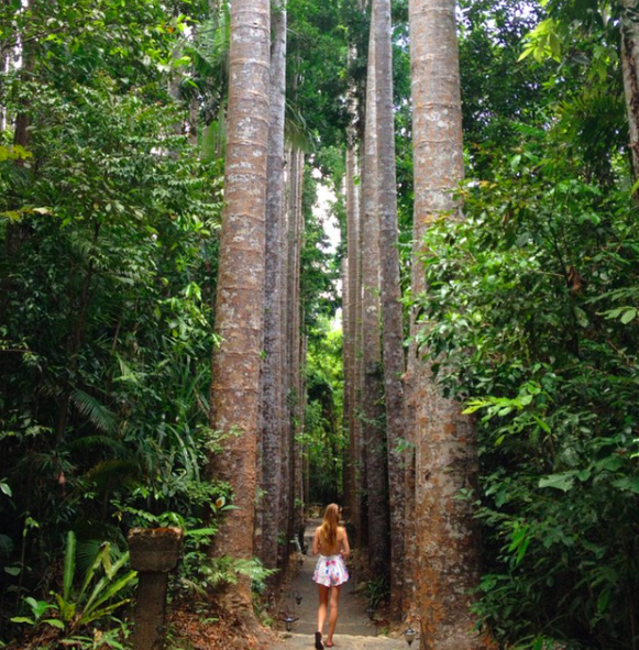 Girl walking through line of Kauri Trees at Paronella Park
