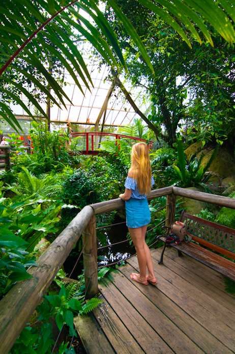 Girl in blue shirt and skirt standing on a boardwalk looking out over plants in the Australian Butterfly Sanctuary