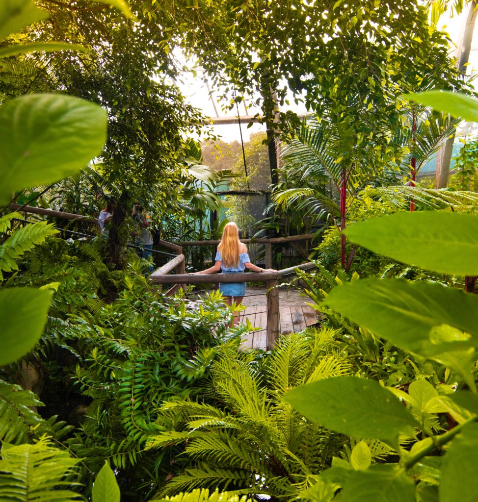 Girl standing on boardwalk surrounded by lush green ferns in a butterfly aviary