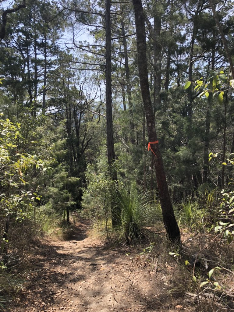 Trail through the bush marked by a colourful marker tied to a tree