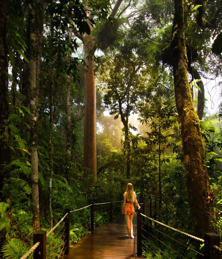 Sarah Latham standing on Skyrail Rainforest Cableway Red Peak boardwalk looking at Kauri