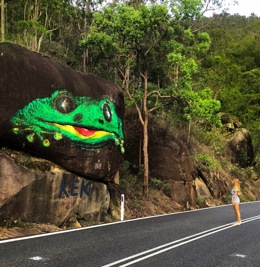 Frog on Gillies Highway in Cairns