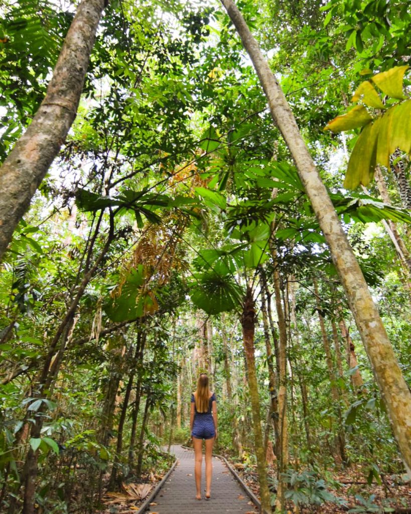 Girl walking through rainforest boardwalk