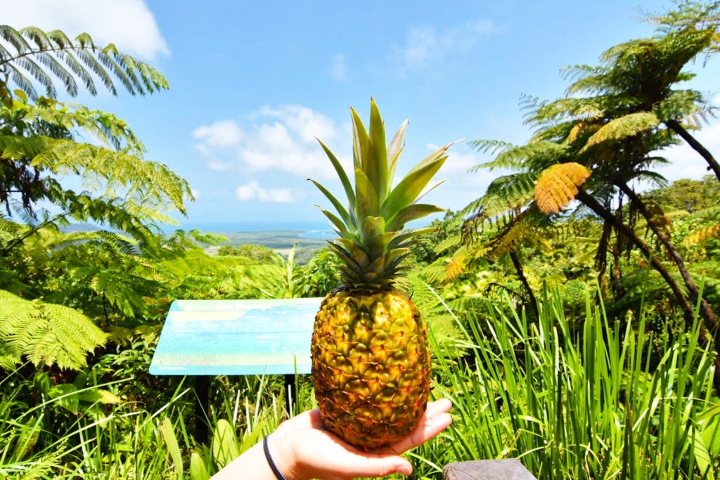 Girl's hand holding a pinapple in the rainforest