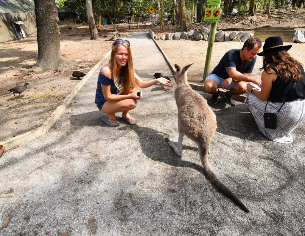 Girl kneeling to be level with a kangaroo at Wildlife Habitat Port Douglas