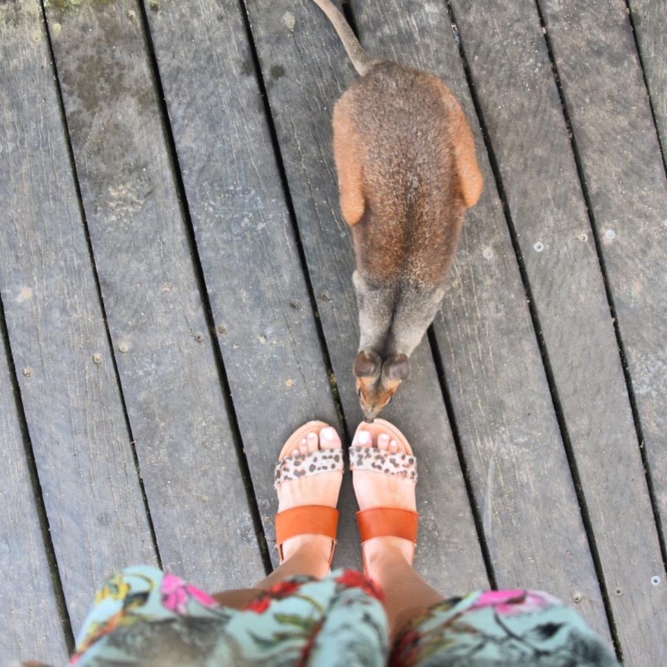 girls feet in shoes with a wallaby
