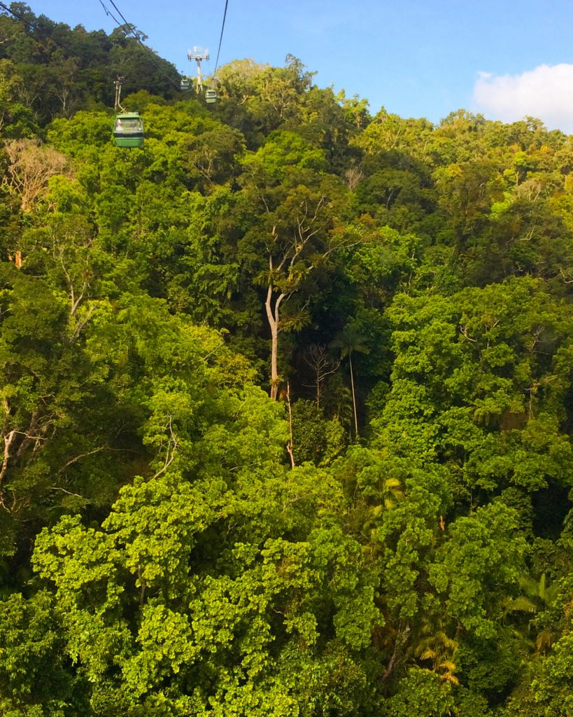 Skyrail Rainforest Cableway gondola journeying across tall tree canopy in Cairns Australia