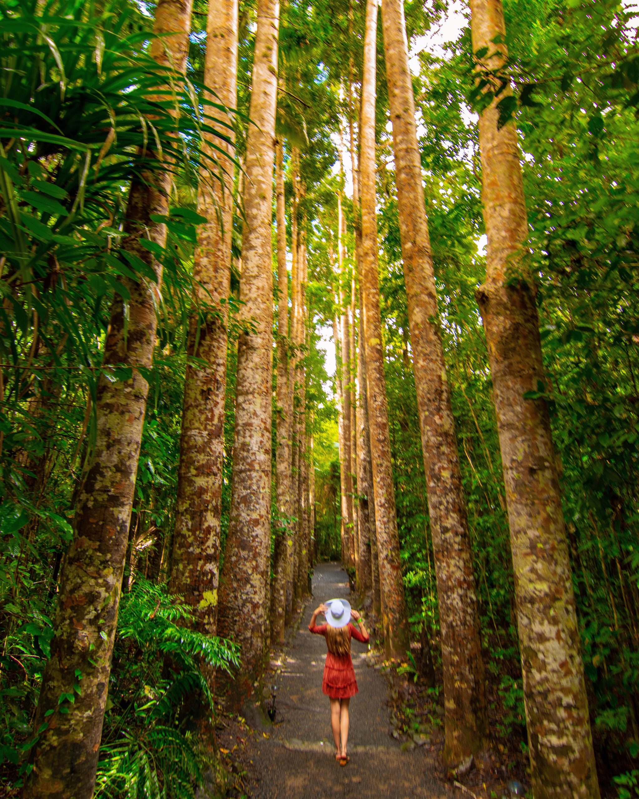 Sarah Latham standing between Kauri Pines at Paronella Park, Cairns Australia