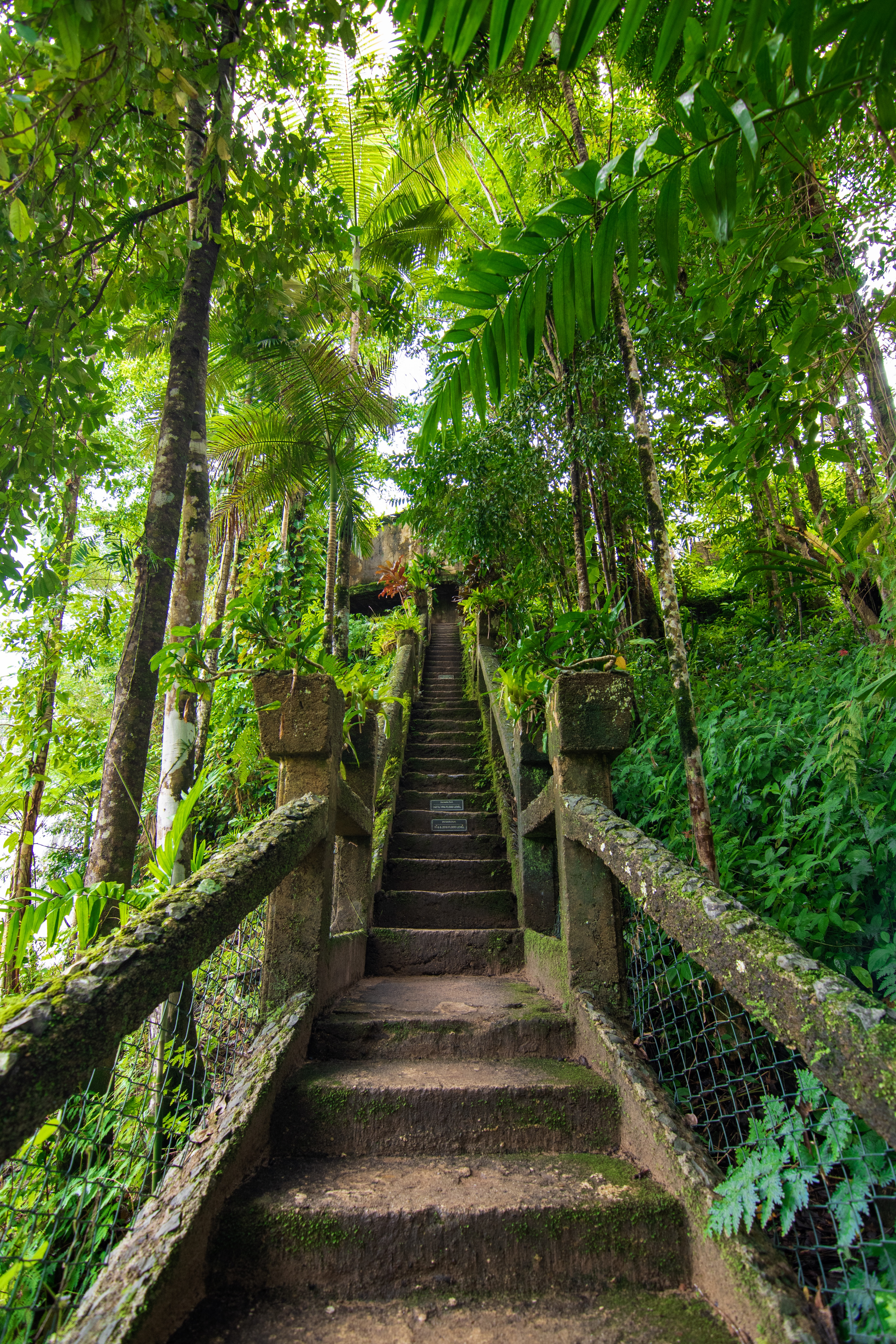 The Grand Staircase at Paronella Park in the rainforest