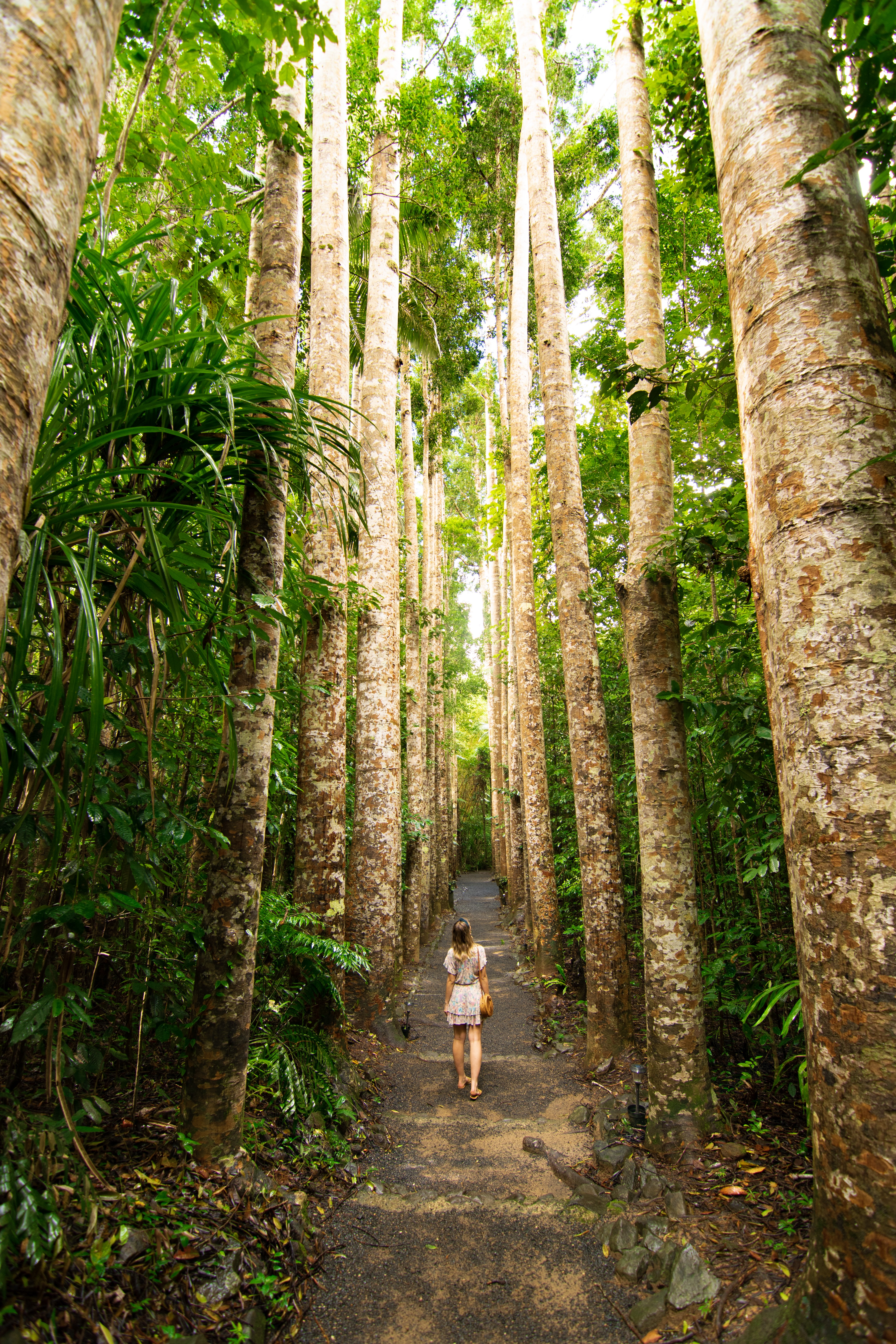 Girl standing in pathway lined by Kauri Pines at Paronella Park