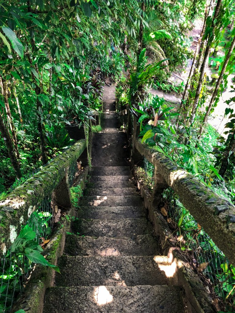 moss covered stair case at Paronella Park