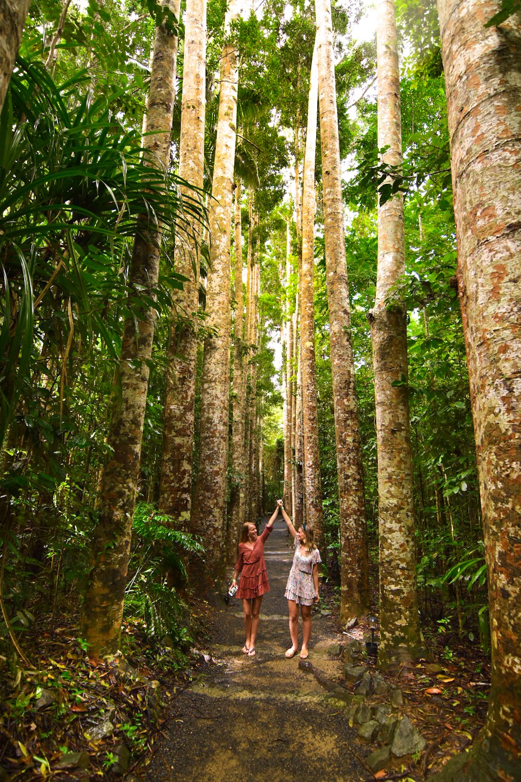 Two girls holding hands on pathway lined by Kauri Pine trees