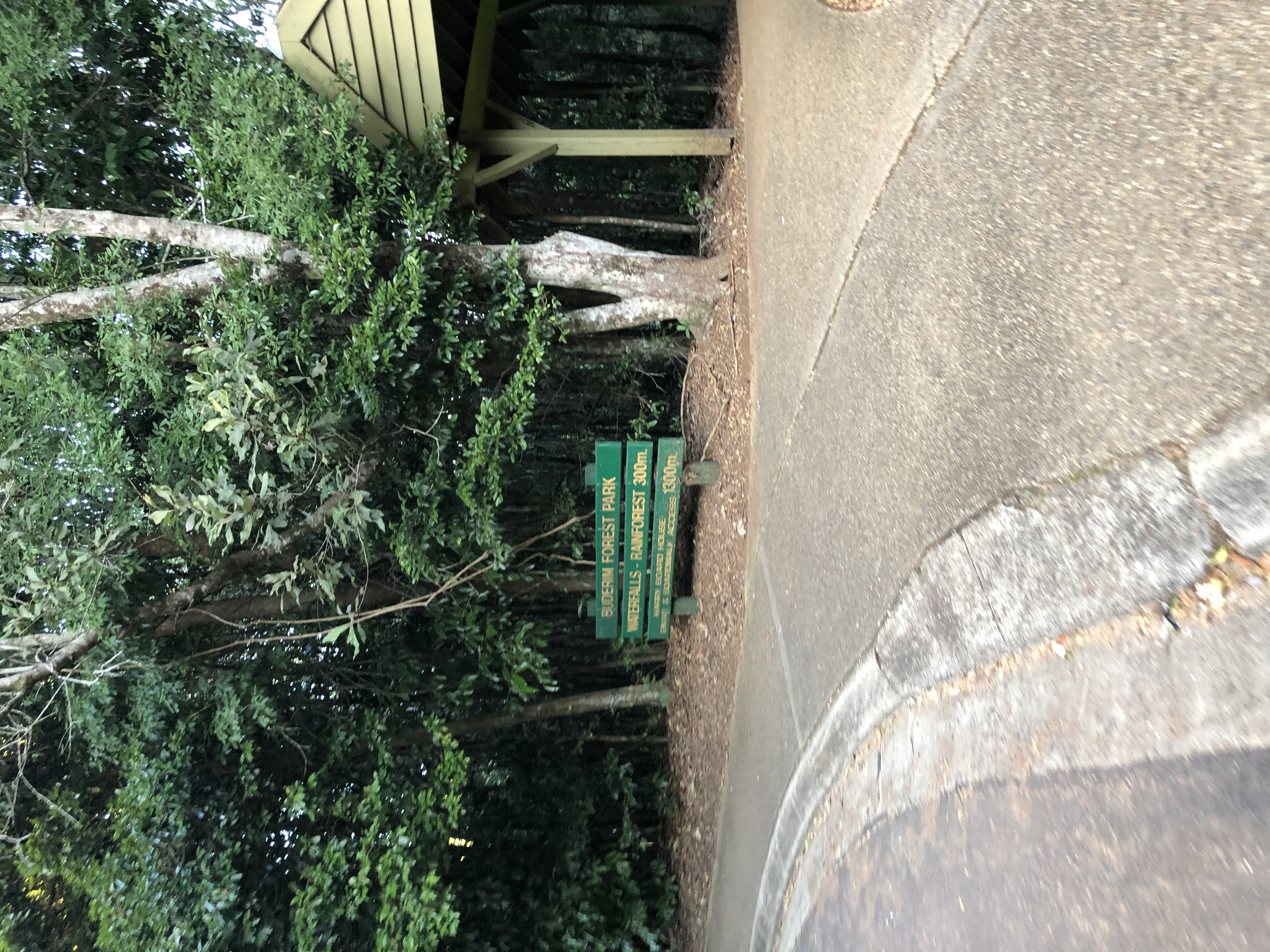 How to get to Buderim Falls Serenity Falls on the Sunshine Coast Sarah Latham